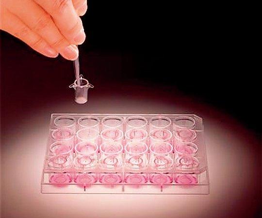 [取扱停止]細胞間反応研究用小型膜チャンバーST等