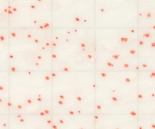 サニ太くん (一般生菌用) 100枚/箱×10箱