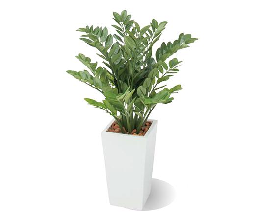 アガベツリー1.0mGD-211