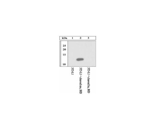 anti-mouse BID cleavage (59/60) site specific; 100 μL AB10002