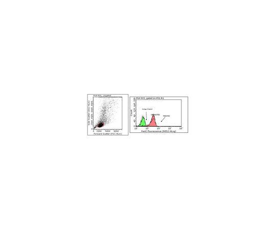 Anti-phospho STAT6 (Tyr641), clone 19E2.1; 100 μg MABE270