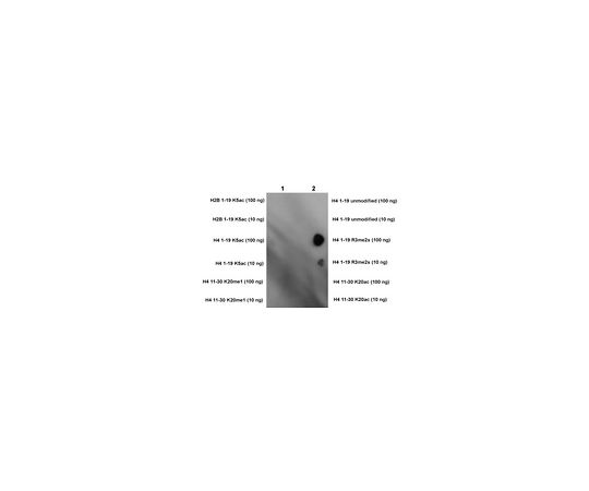 Anti-H2A (H4R3me2s) Antibody, clone 6G1/1D3 MABE364