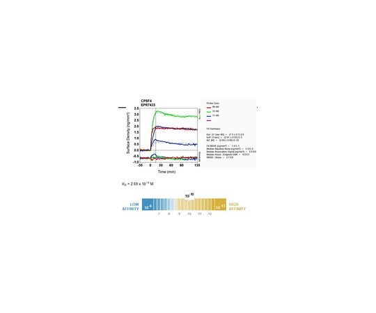 Anti-CPSF4, clone EPR7433, Rabbit Monoclonal MABE620