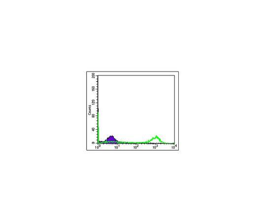 Anti-EIF4E, clone 5D11 Antibody MABE630