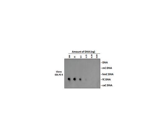 Anti-5-Formylcytosine (5fC) Antibody, clone EDL FC-5 MABE1092