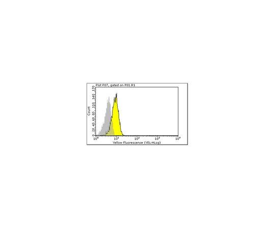Anti-CD3 gamma delta (HMT3-2), clone Ham25-1157; 100 μg MABF116