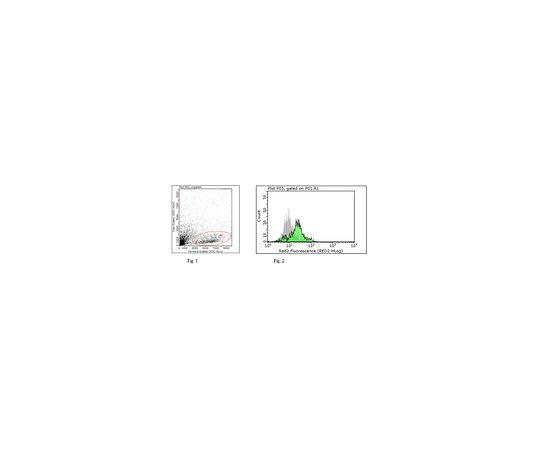 Anti-Tapasin Antibody, clone 7F6 MABF249