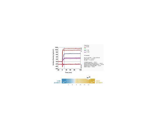 Anti-CD160, clone EPR8054, Rabbit Monoclonal MABF756