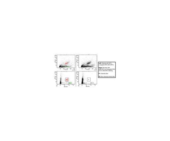 Anti-FcgRIV (CD16-2) Antibody, clone 9E9 MABF853