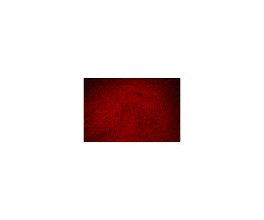 Alizarin-Red Staining Solution TMS-008-C TMS-008-C