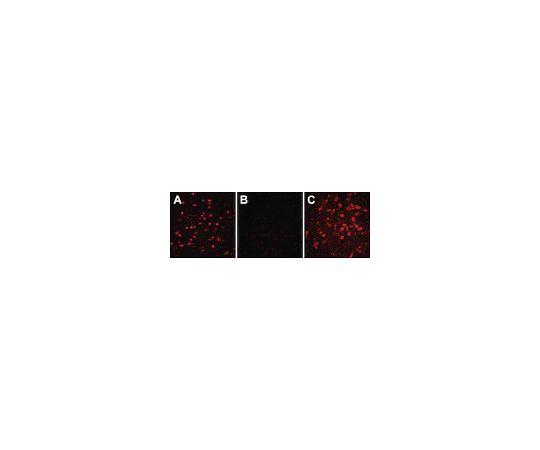 Autofluorescence Eliminator Reagent; 50 mL 2160 2160