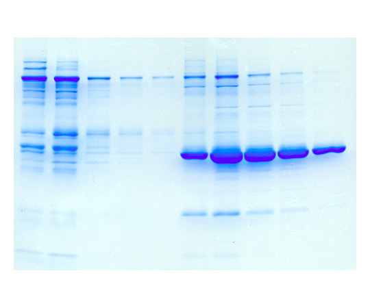 Affinity Chromatography, For 6 groups of 4-5 or 24-30 students. BE-417