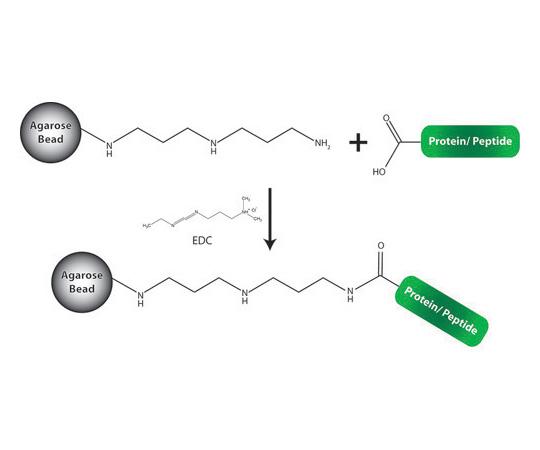 PBS [10X] (phosphate buffered saline) (43mM NaH2PO4, 1.37M NaCl, 27mM KCl, 14mM KH2PO4, pH 7.4), For 5 x 2mL column 786-809