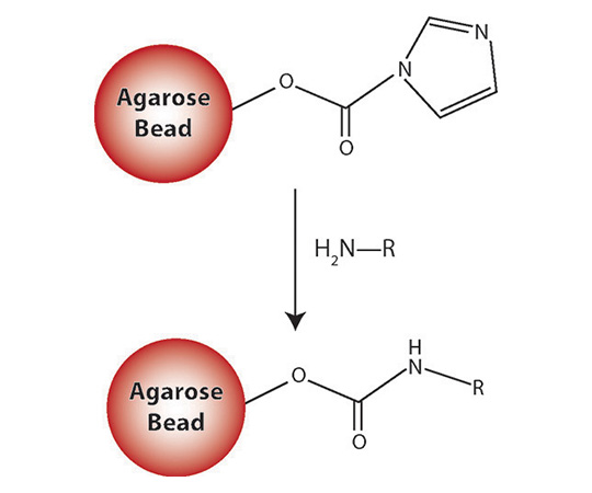 CDI Amine Reactive Agarose, 10mL resin 786-404
