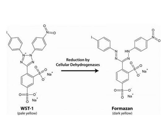 CytoScan WST-1 Cell Cytotoxicity Assay, 2000 Assays 786-857