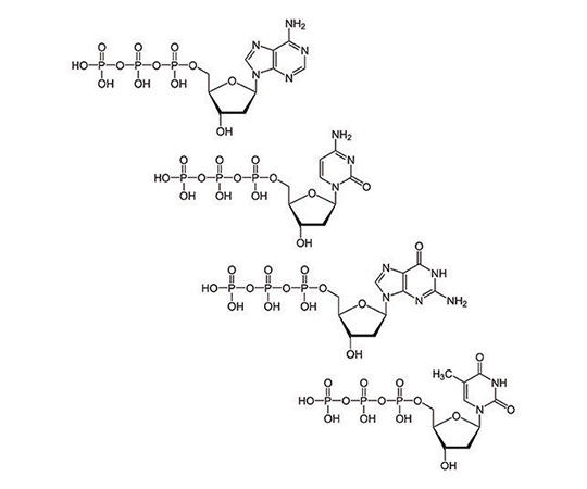 Deoxynucleotide Set [100mM], 4 x 25µmole 786-460
