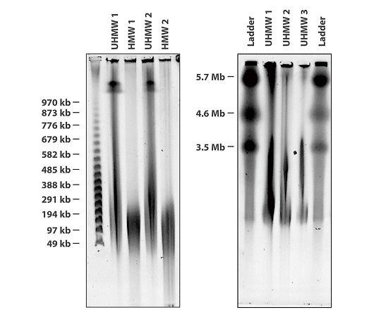 Nanobind 高分子ゲノムDNA抽出キット(磁気ディスク) 細胞、全血、バクテリア用 NB-900-001-01