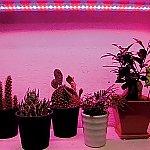 植物育成補光用LEDライト等