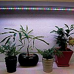 Plant Cultivation LED Light LED for Supplemental Lighting and others