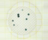 ペトリフィルムTM培地 (水中カビ・酵母測定用/50枚×2袋)