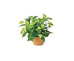 [取扱停止]ライムポトス 光触媒人工植物 約W400×D400×H360mm S3608-40