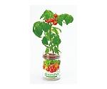 グリーンペットベジ ミニトマト 2756