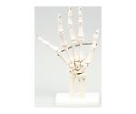 [取扱停止]手関節模型