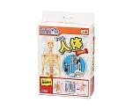 [取扱停止]リアル人体骨格模型