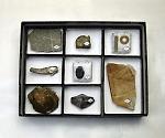 [取扱停止]動物植物化石標本