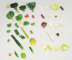 フードモデル12-A 野菜のフードモデル(44種)