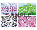 プレパラート 動物・ヒト・植物細胞学 特別セット 英語版 1020498