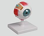 眼球6分解モデル 100×100×120 F210